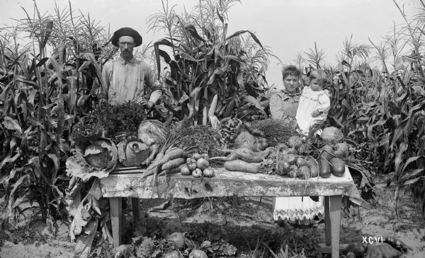 Produce, including sweet corn, cabbage, carrots, rutabagas, squash, onions, from the Menomonee River Boom Company garden near Marinette.