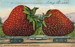 Photomontage of two giant strawberries on a wagon.