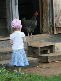 Child looking at a rooster.