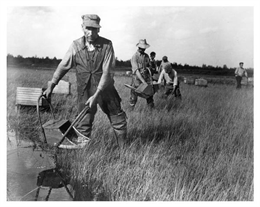 A group of men harvesting cranberries.