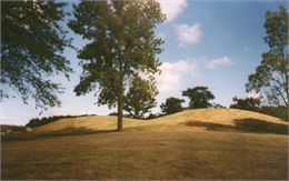 A line of conical burial mounds on a hill overlooking Aztalan.
