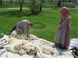 A man outside the Wade House shears a batch of sheepskin.