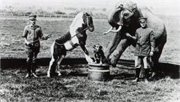 circus animals performing