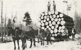 lumber sled with logs