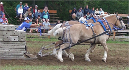 An image of two horses pulling a stone boat.