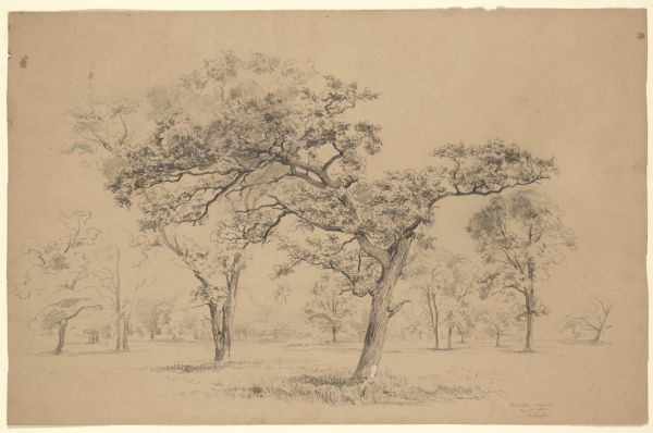 Burr Oaks, 1852, Madison, WI WHI 31186.