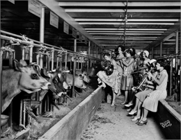The Ingenues, an all-girl band and vaudeville act, serenading the cows in the University of Wisconsin-Madison Dairy Barn