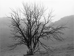 A black, bare tree against hills with mist, fog and rain.