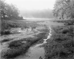 A misty, foggy swamp in the Wisconsin River.