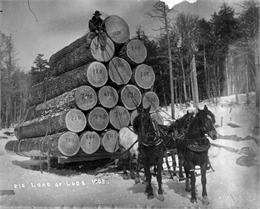 A man sits atop a very high load of logs on a sled pulled by three horses.