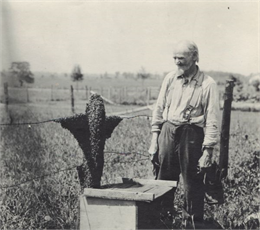 Swarm of Bees on Fence Post with Frank Buhl.