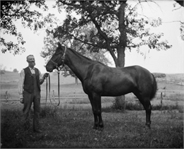 Leroy J. Burlingame, the photographer's father-in-law, and his horse Dan standing outdoors near trees.