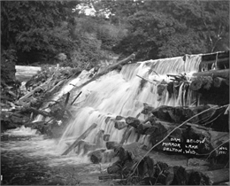 Water pouring between the logs of the Mirror Lake Dam. The opposite shoreline has trees and plants covering a steep, rocky cliff.
