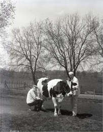 Black and white photograph of Dr. Stephen Moulton Babcock seated on a stool and milking a cow.