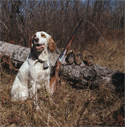 Hunting Dog and Woodcocks