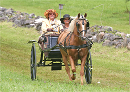 Carriage Driving Days
