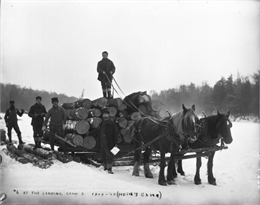 Five men on a log sled pulled by horses.